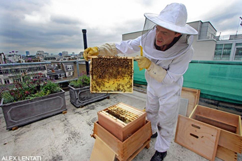 Start Your Honey Business In Bermondsey Street, London